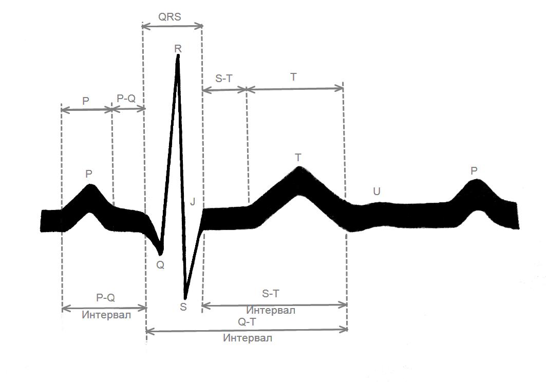 Схема нормальной ЭКГ с обозначением зубцов, сегментов и интервалов