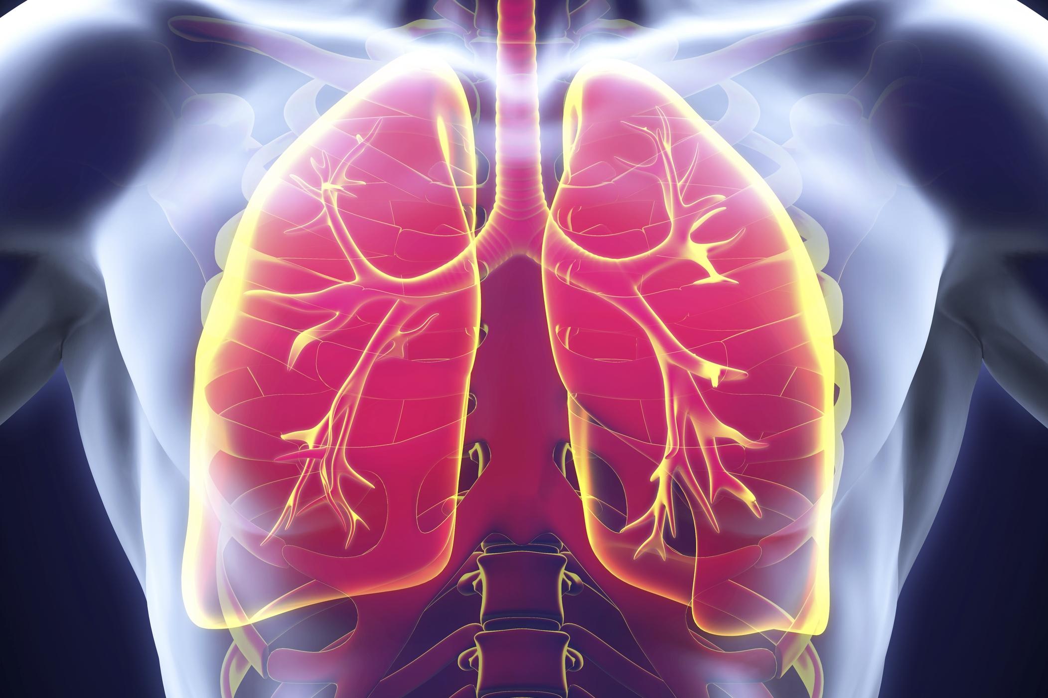 На рисунке объемное изображение органов грудной клетки для статьи о туберкулезе легких