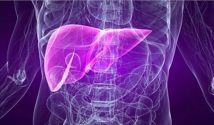 Хронический гепатит и цирроз печени: методы диагностики и принципы лечения