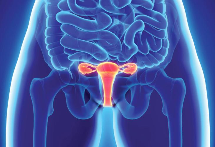 УЗИ матки с придатками в диагностическом центре Эндос