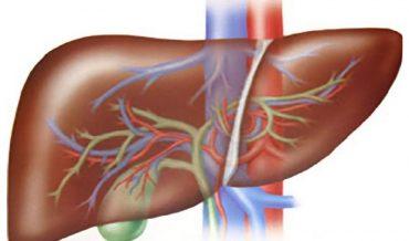 Хронический гепатит: классификация, патогенез