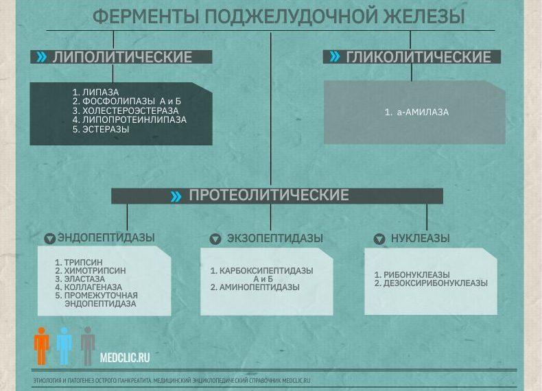 Ферменты поджелудочной железы, медицинская энциклопедия Medclic.ru