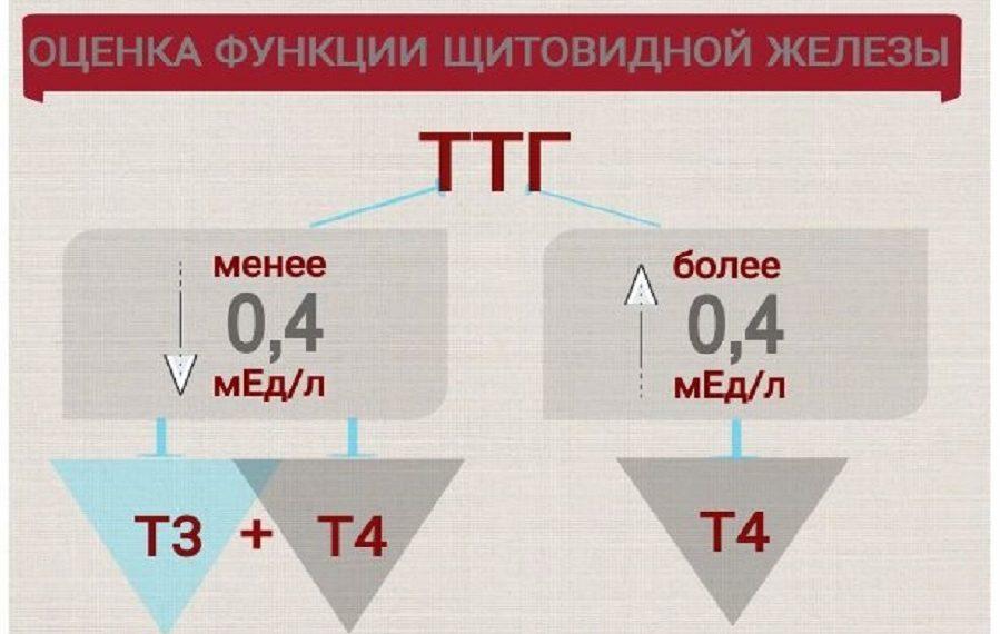Изображение для заставки к статье о гормонах щитовидной железы, полная таблица в тексте статьи, медицинская энциклопедия resursor.ru